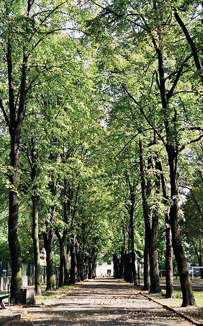 Park przy ulicy Moniuszki.