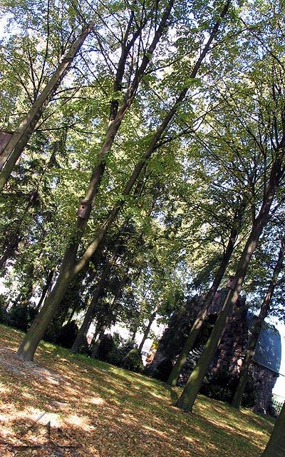 Park na terenie parafii M.B. Częstochowskiej.<br>W tym miejscu do roku 1926 znajdowały się groby kilku powstańców styczniowych.